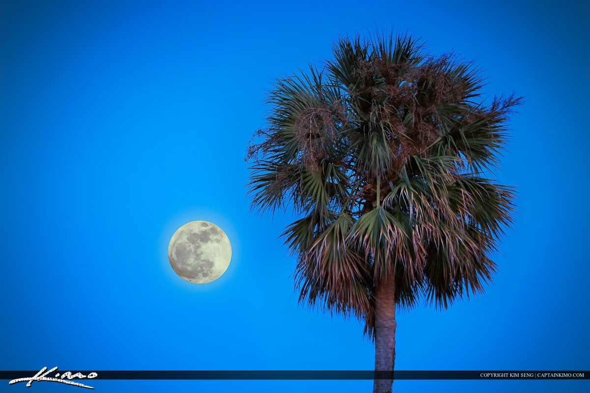 Moon Rise with Palm Tree Over Palm Beach County Florida