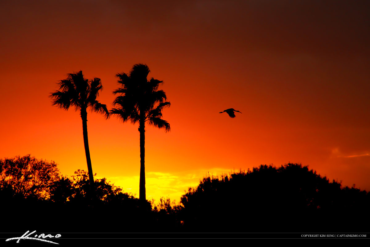 Silhouette of Palm Tree and Ibis Flying