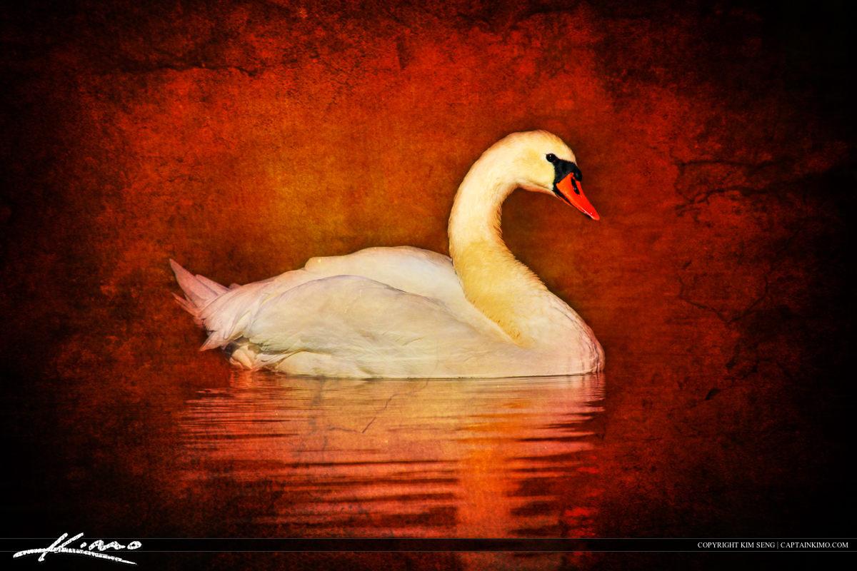 Swan Textured Photo Bird Art Swimming in Pond at Boston Public Garden