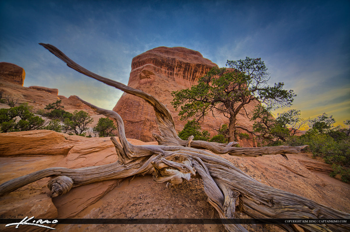 Deadwood On Trail to Landscape Arche at Arches National Park Moab Utah