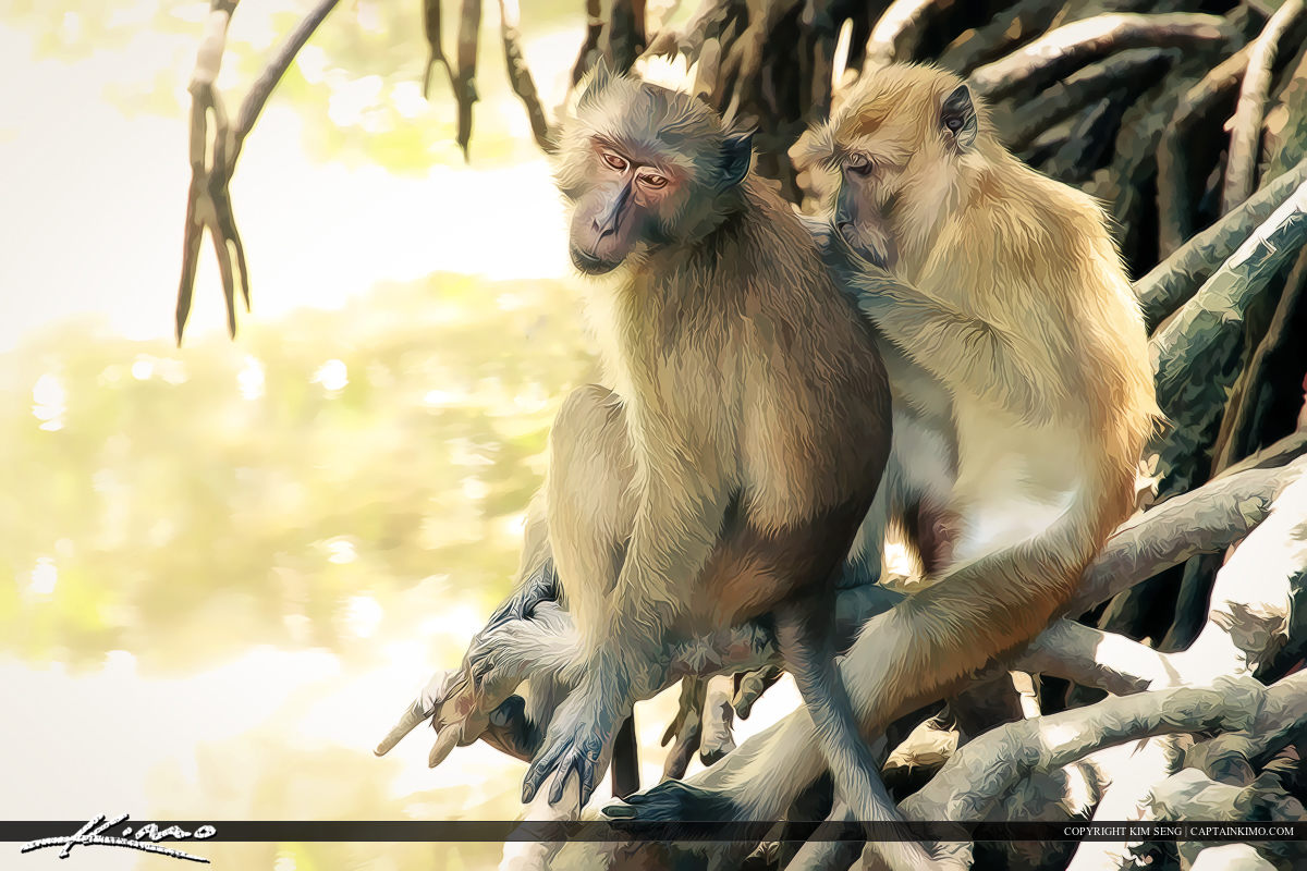 Crab-eating Macaque Grooming on Manrgove Tree