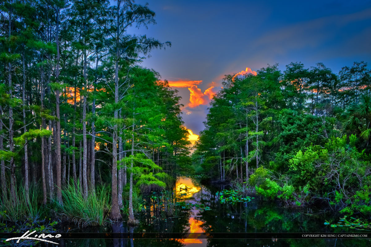 Canal with Cypress Trees at Sandhill Crane Park