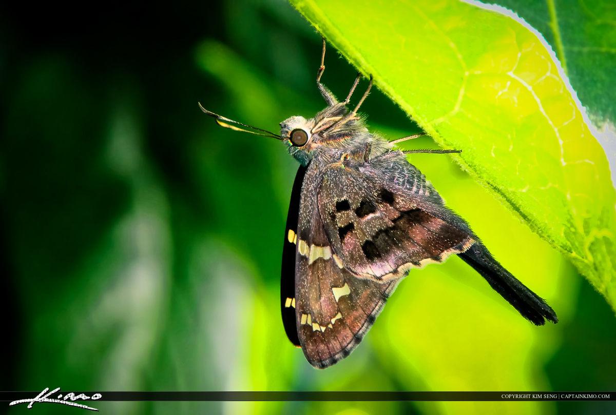 Butterfly Moth from Backyard Garden Palm Beach Gardens Florida