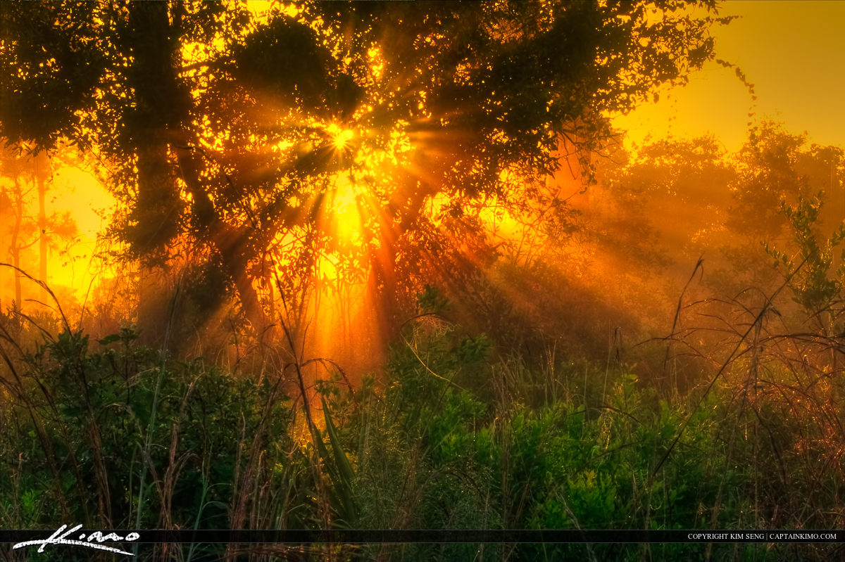 Glourious Light Rays from Pine Forest in Jupiter Farms Florida