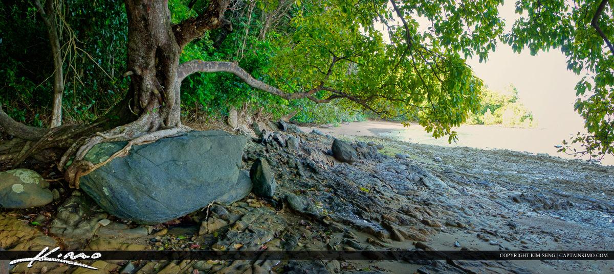 Tree Growing on Rock at Cape Yamu Phuket Thailand