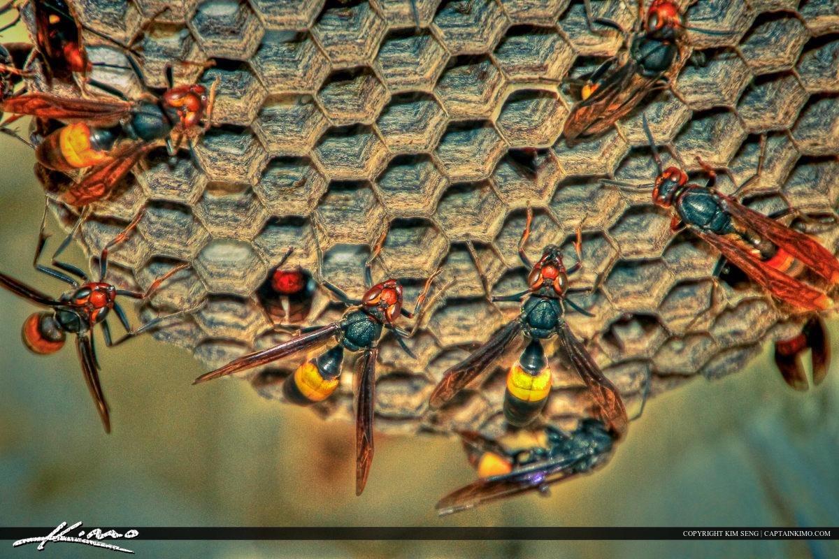Large Wasp Nest Under House Phuket Thailand