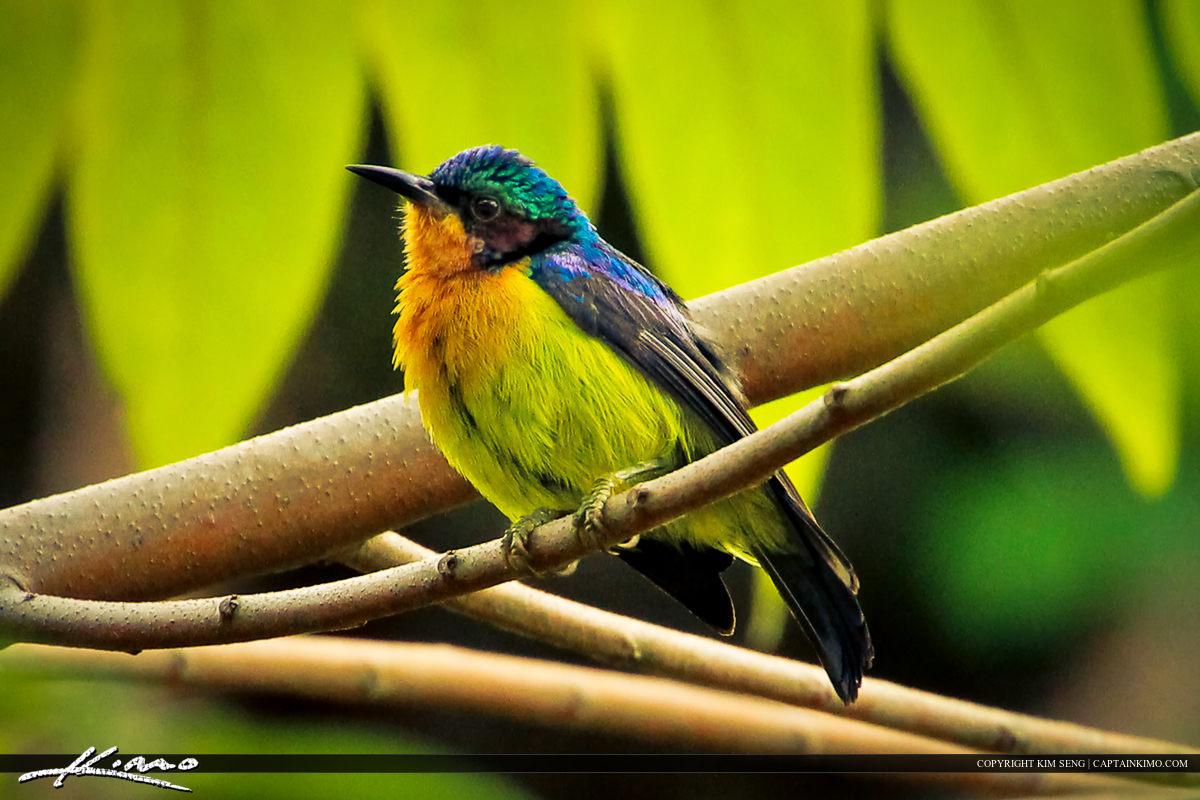 Small Tropical Bird from Phuket Thailand