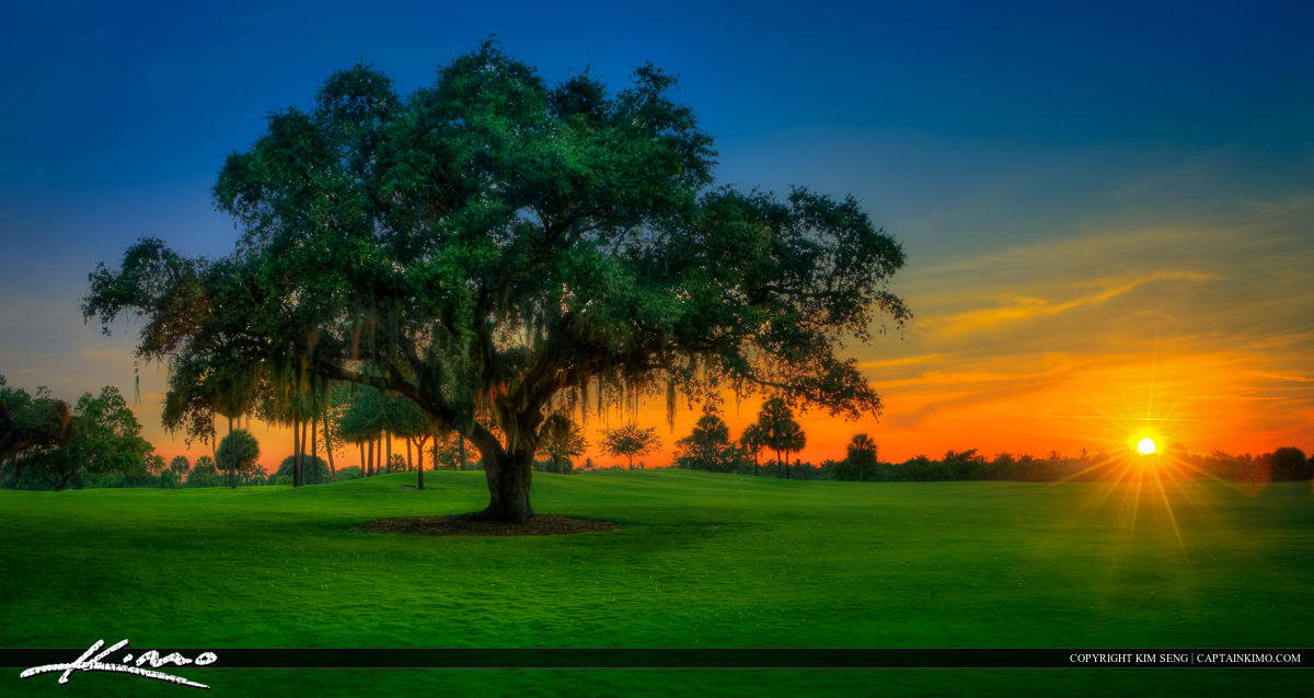 Live Oak During Sunset at North Palm Beach Golf Course