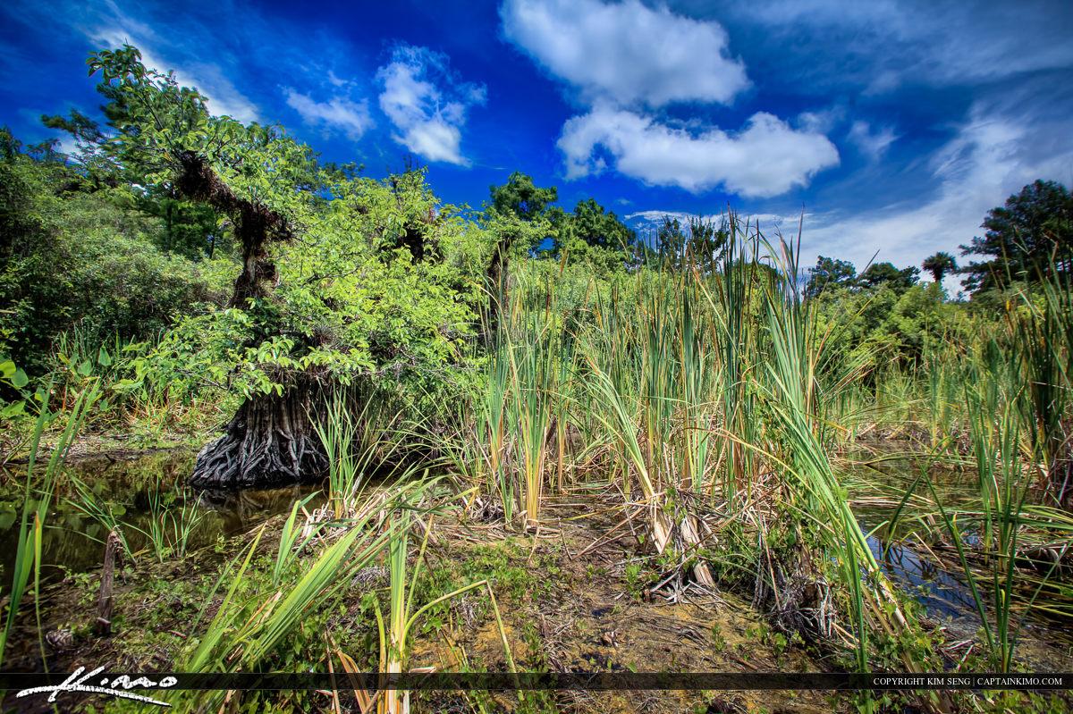 Fakahatchee Strand Lake Florida Everglade Wetlands