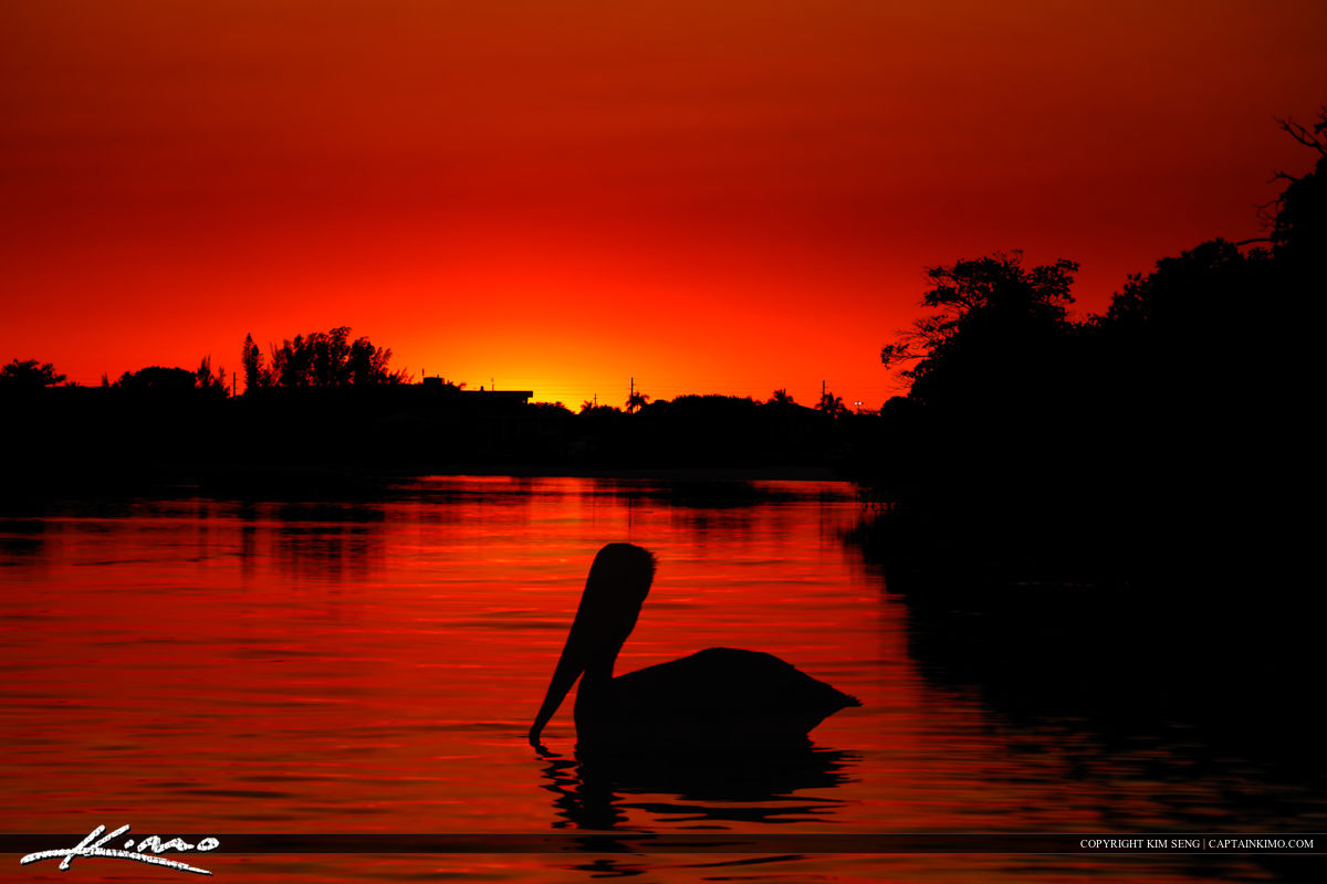 Pelican at Singer Island During Red Hot Sunset