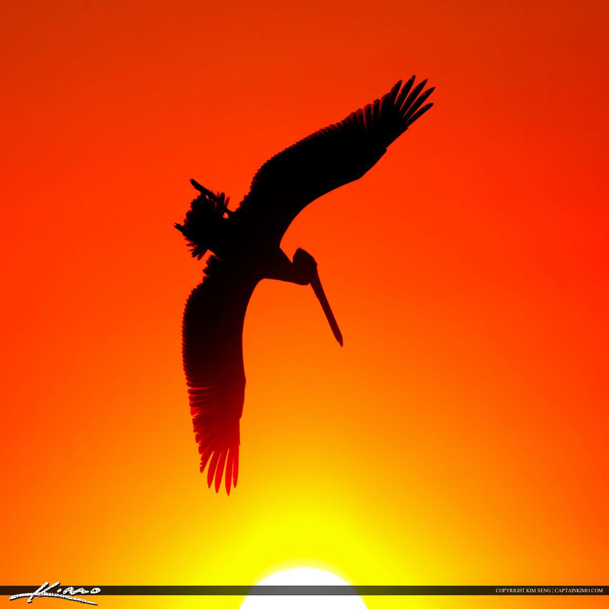 Pelican Diving into the Sun