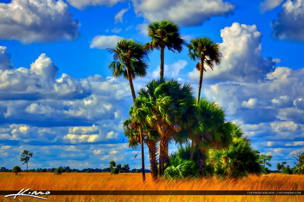 Allapattah Flats Preserve Florida Prairie Landcsape