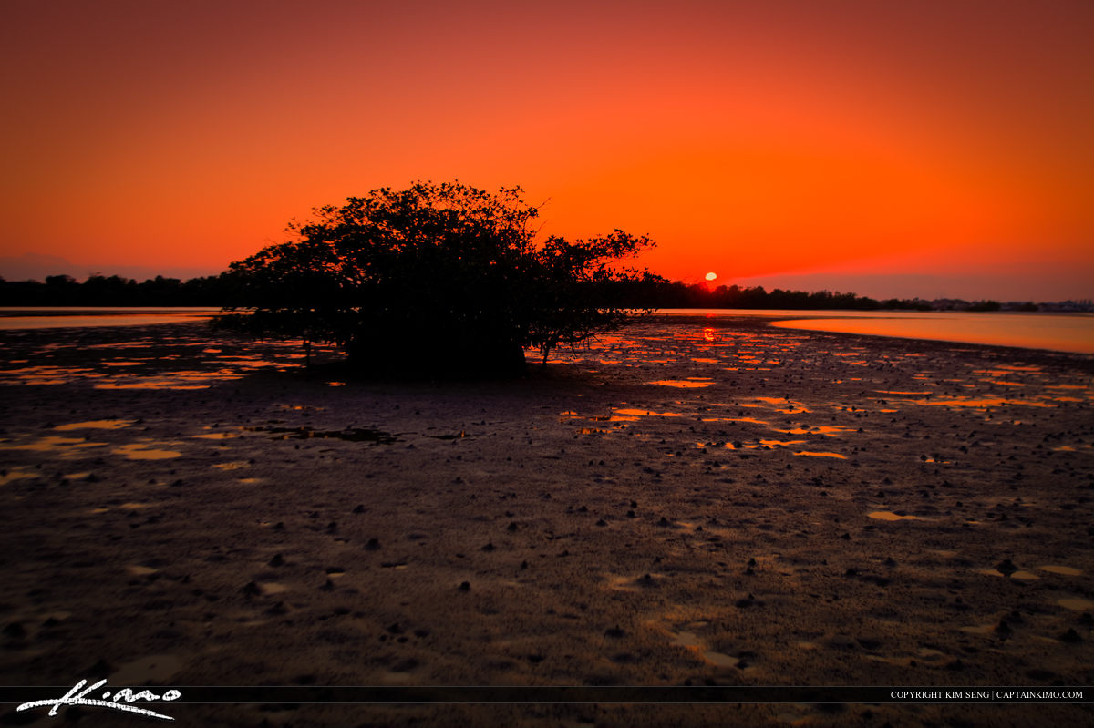 Mangrove Silhouette Munyon Island Sunset