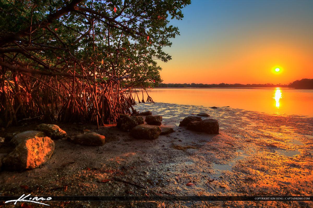 Sunset at Lake Worth Lagoon Singer Island Mangrove Tree
