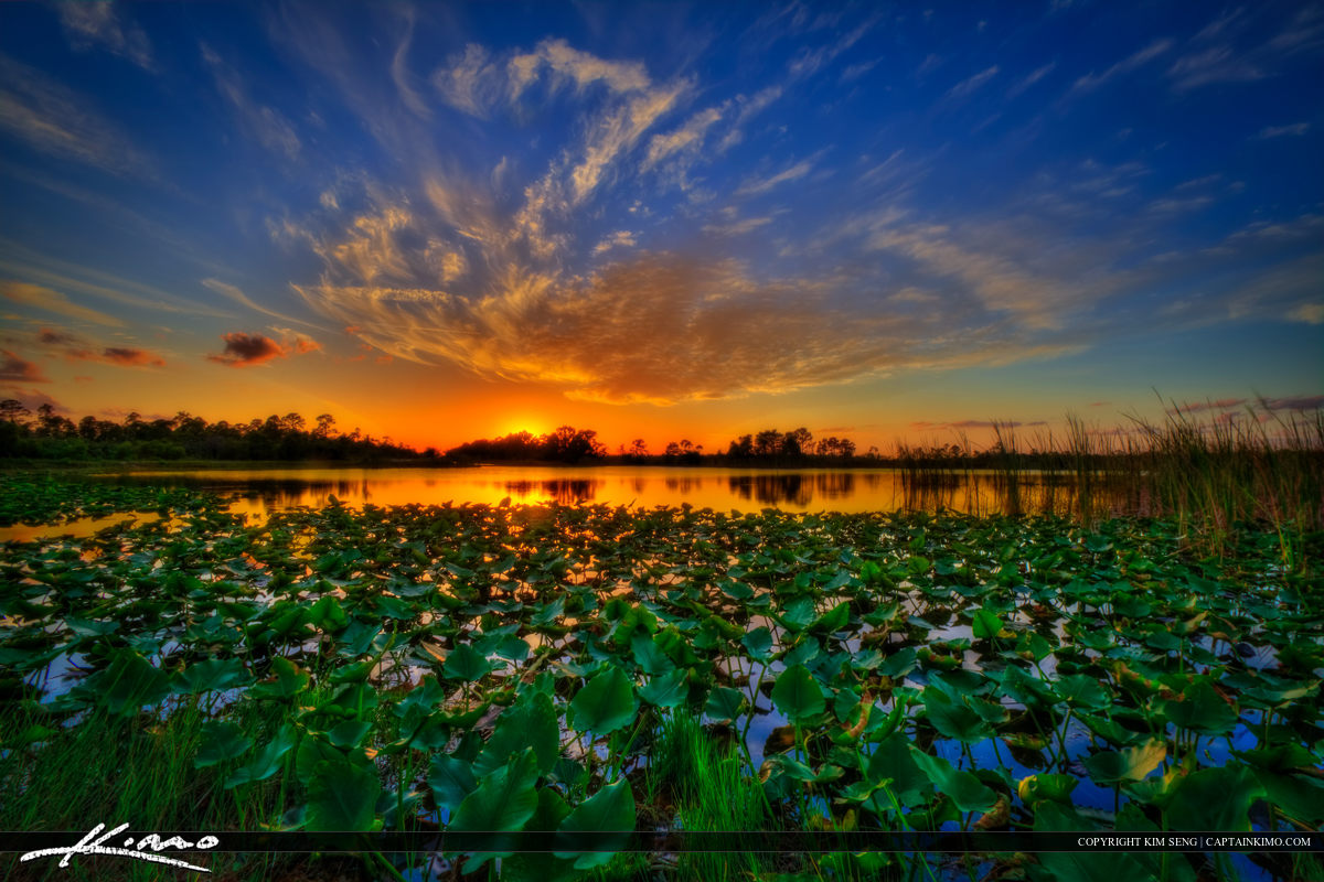 Sunset Over Florida Lake with Lilypads