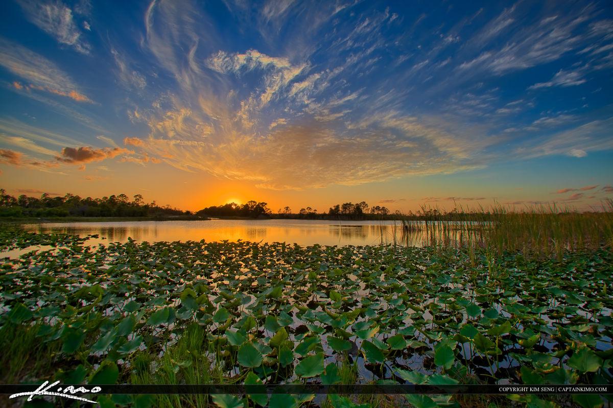 Sunset Over Lilypad Lake at Hungryland in Jupiter Florida