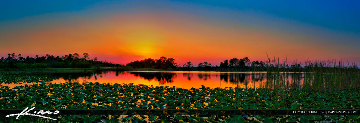 Sunset Panorama Over Lilypad Lake Florida