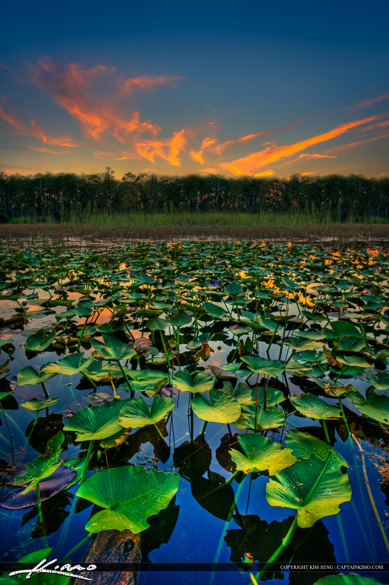 Lilypad Pond During Sunset at Loxahatchee Slough Natural Area