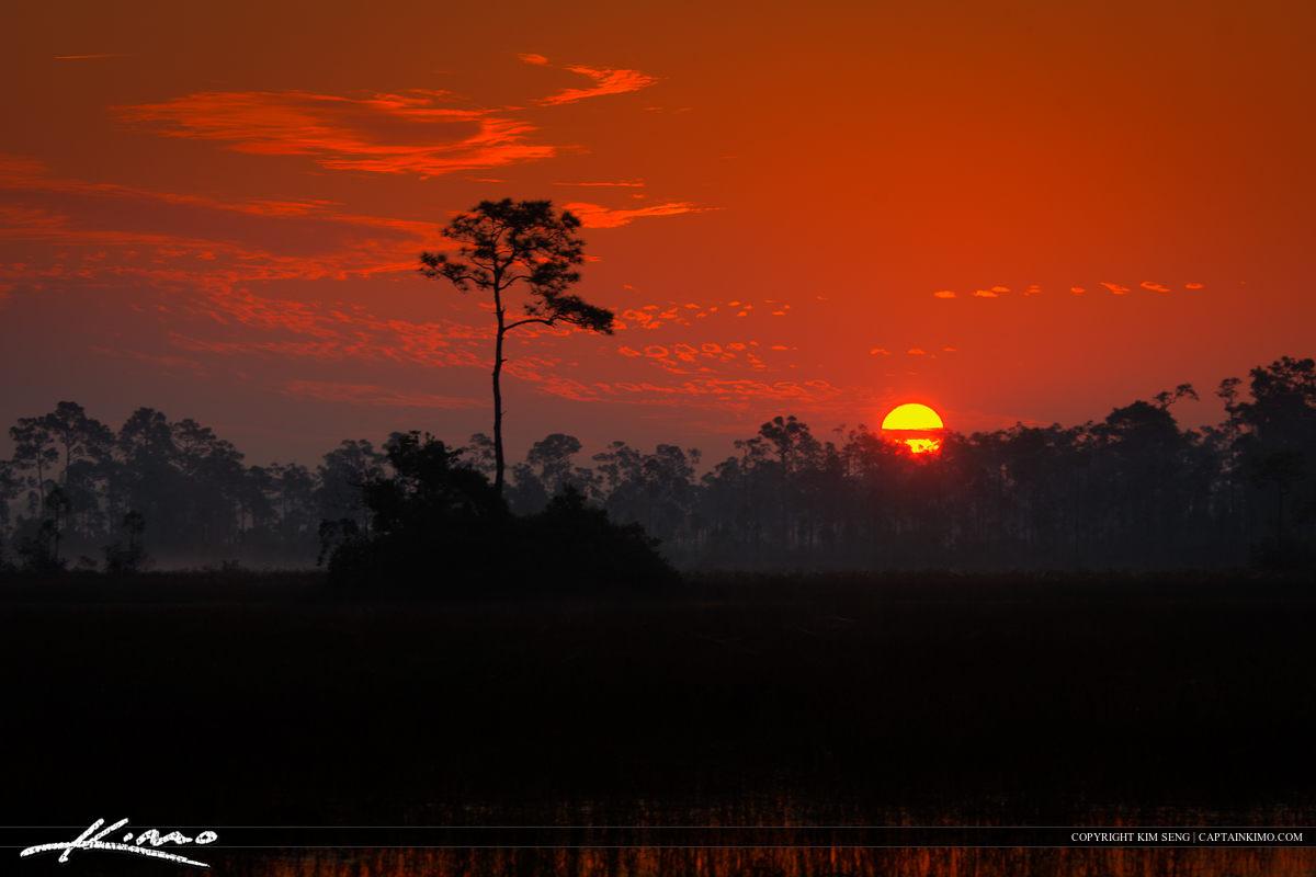 Sunrise Over Lone Pine at Florida Wetlands