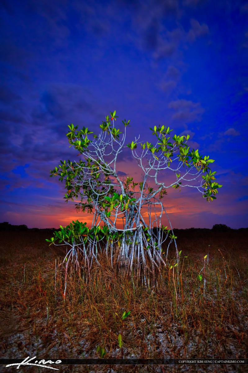 Mangrove After Sunset at Everglades National Park Florida