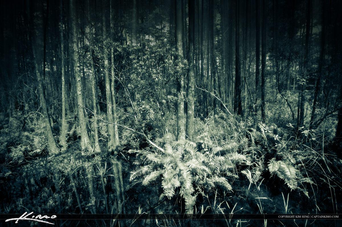 Grassy Water Preserve Cypress Forest Palm Beach Gardens Florida