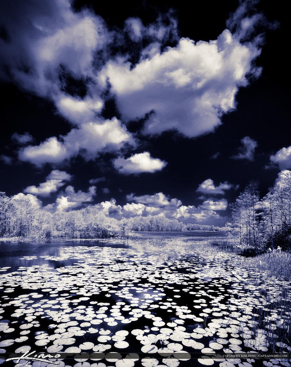 Lake at Grassy Water Wetland Preserve HDR IR Style Image
