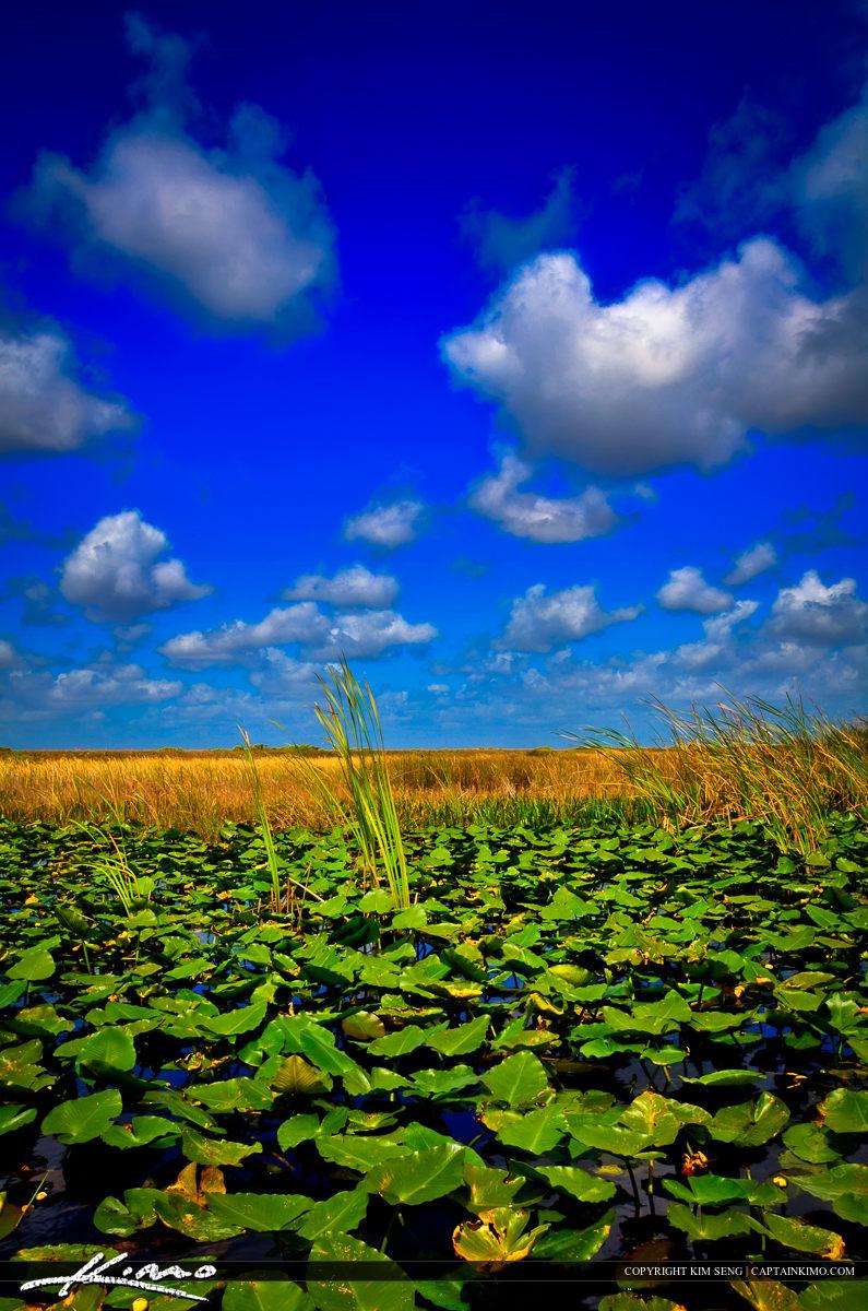 everglades wetlands at loxahatchee national wildlife refuge
