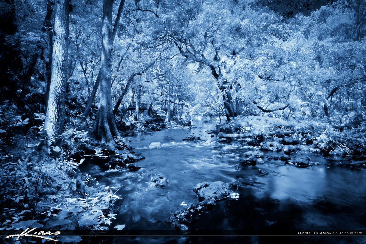 Hillsborough River Flowing Through the Forest