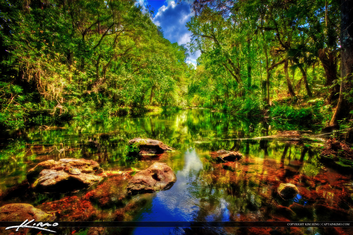Magical Forest Hillsborough River Thonotosassa Florida