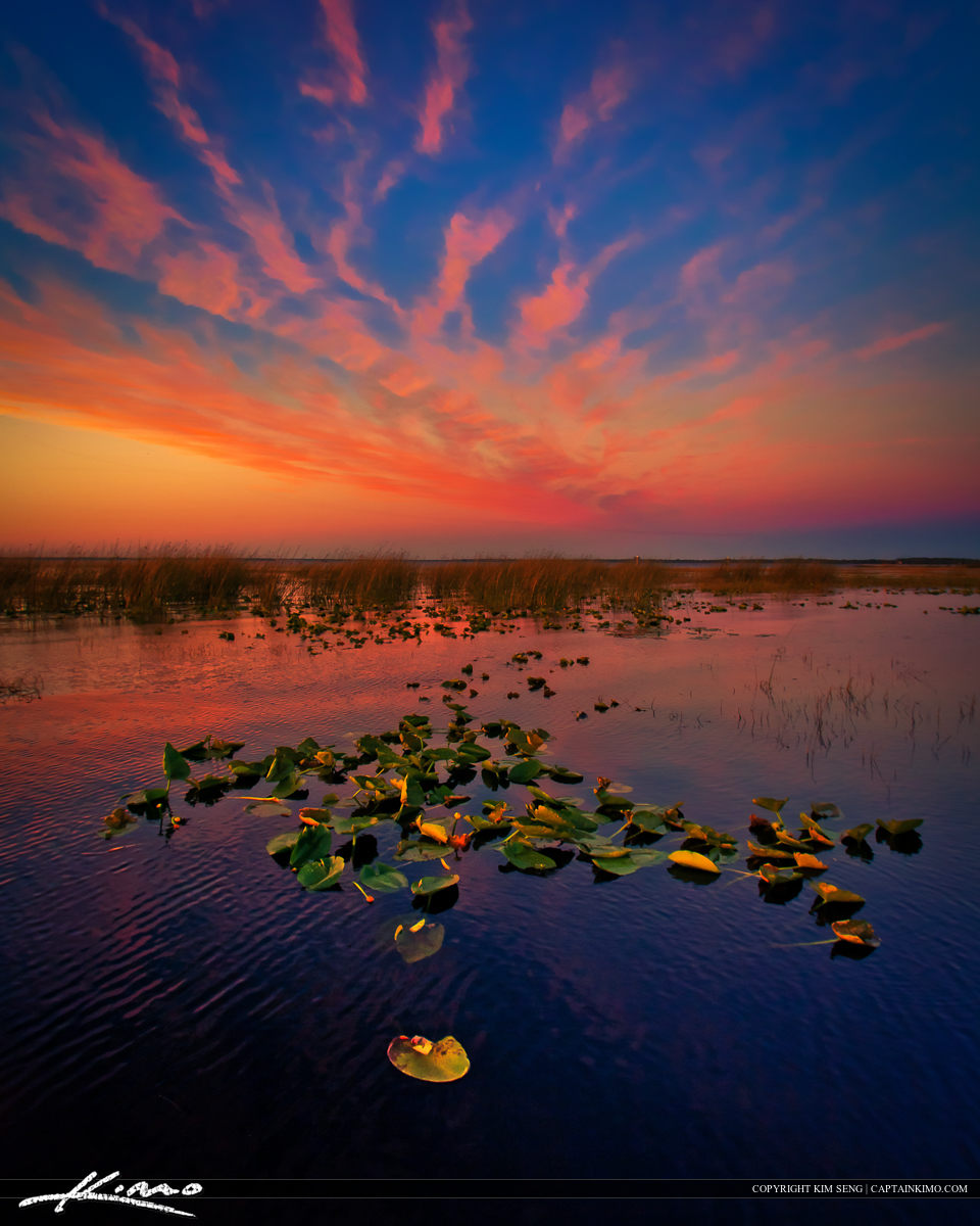 Sunset at East Lake Tohopekaliga Lily Pads St Cloud