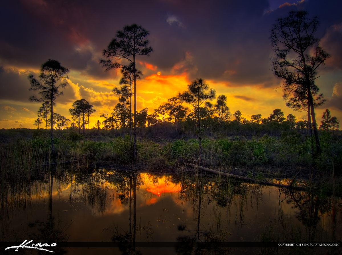 JW Corbett Wildlife Management Area Sunset Over Pine Forest