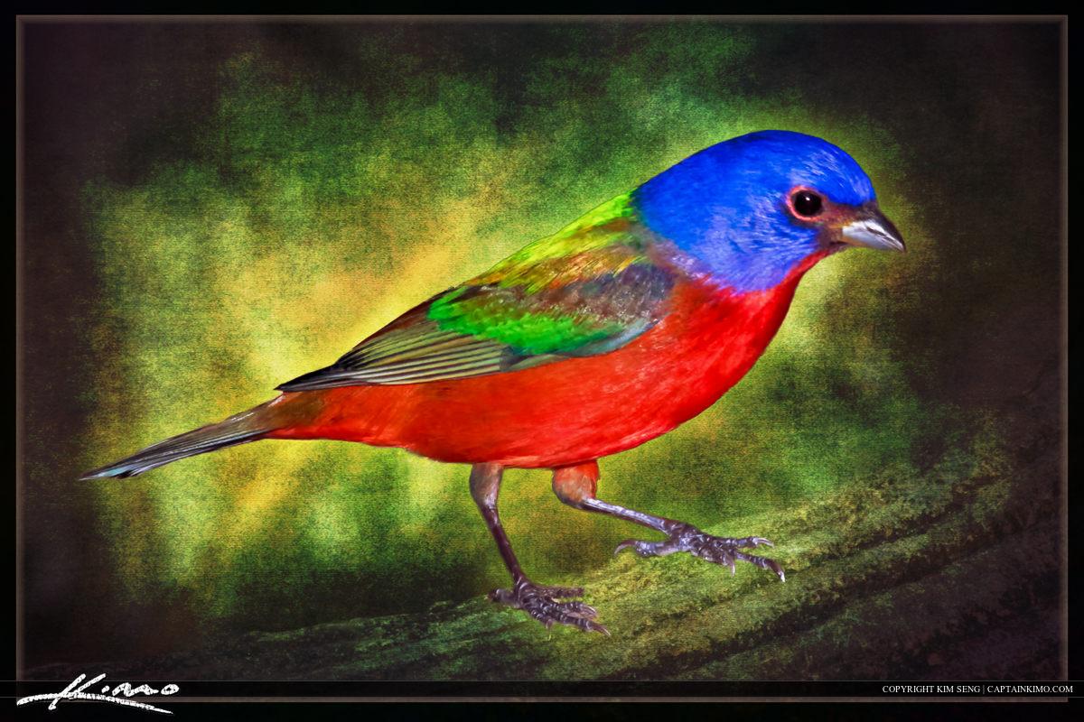 Painted Bunting Bird Textured Art Photomontage
