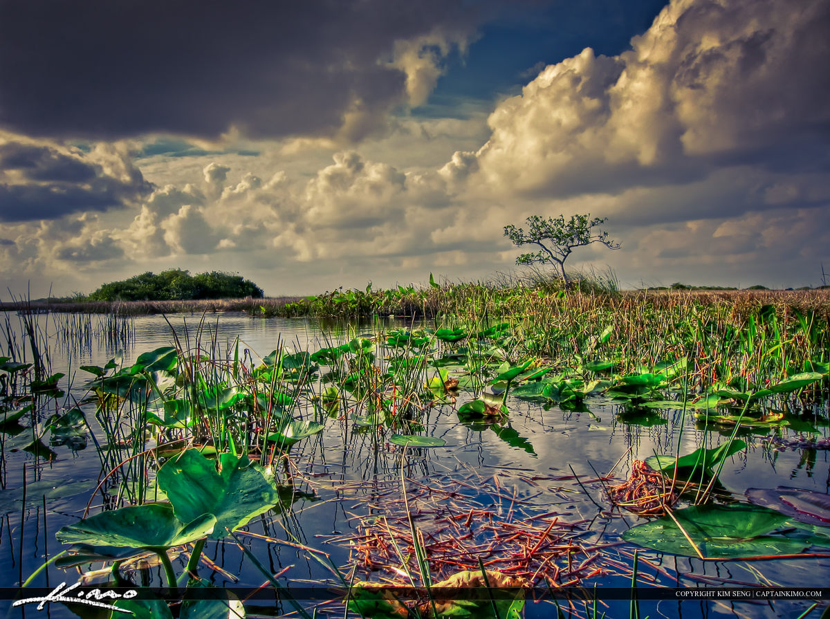 Florida Everglades Wetland Landscape from Shark Valley