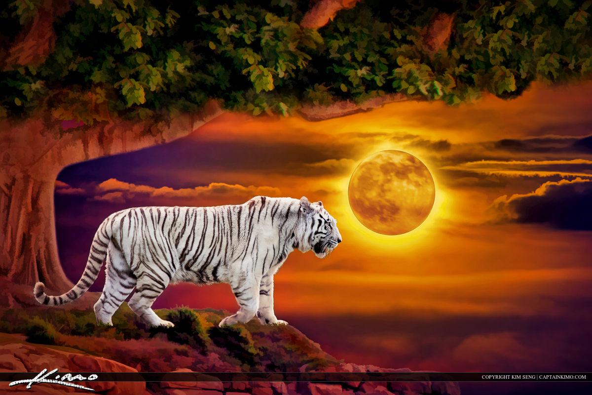Albino White Tiger at Moonrise