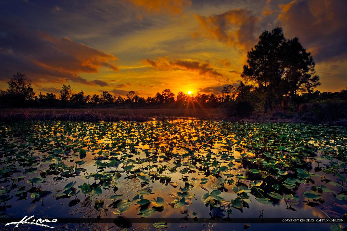 Lilypad Lake at Sunset Palm Beach Gardens Florida