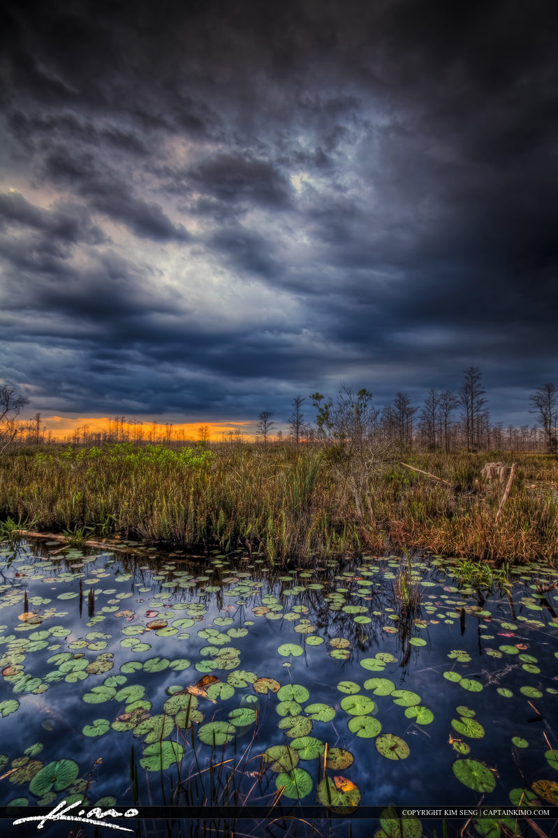 Storm Brewing Over Loxahatchee Slough Wetlands Palm Beach County
