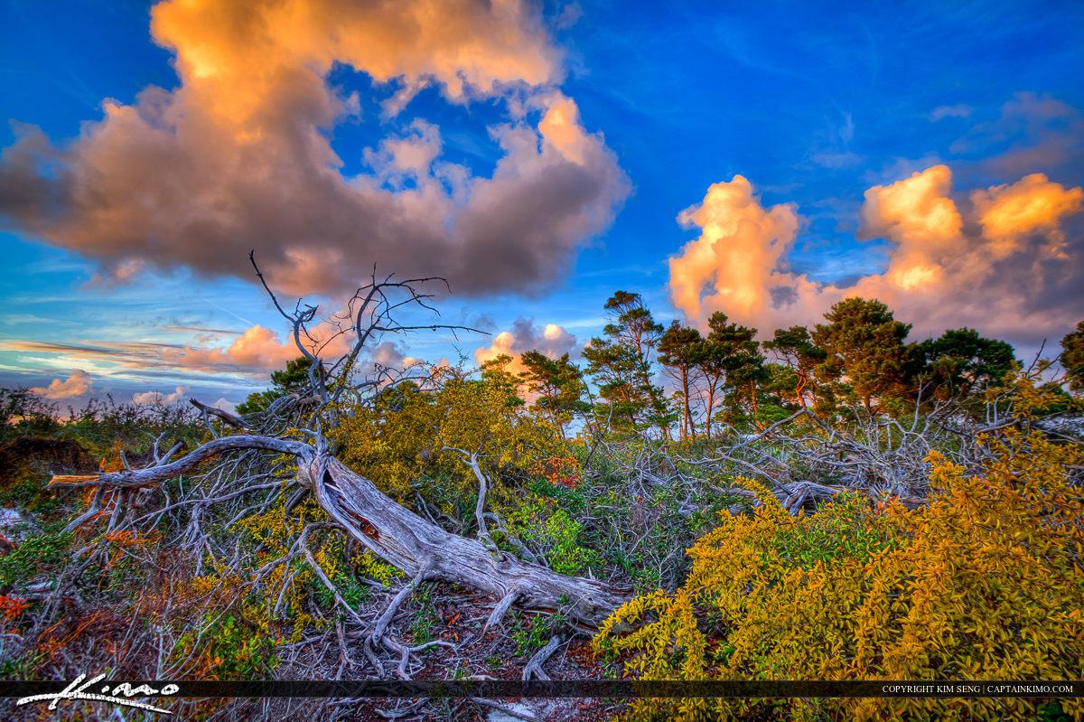 Fallen Dead Tree Jupiter Natural Area Florida