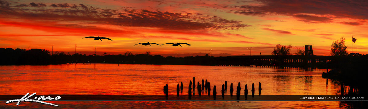 Pelicans Flying into Sunset Over Waterway in Jupiter Florida