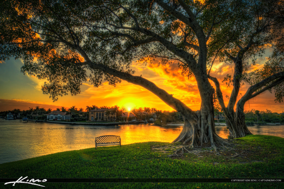 Bench Under Banyan Tree to Watch the Sunset
