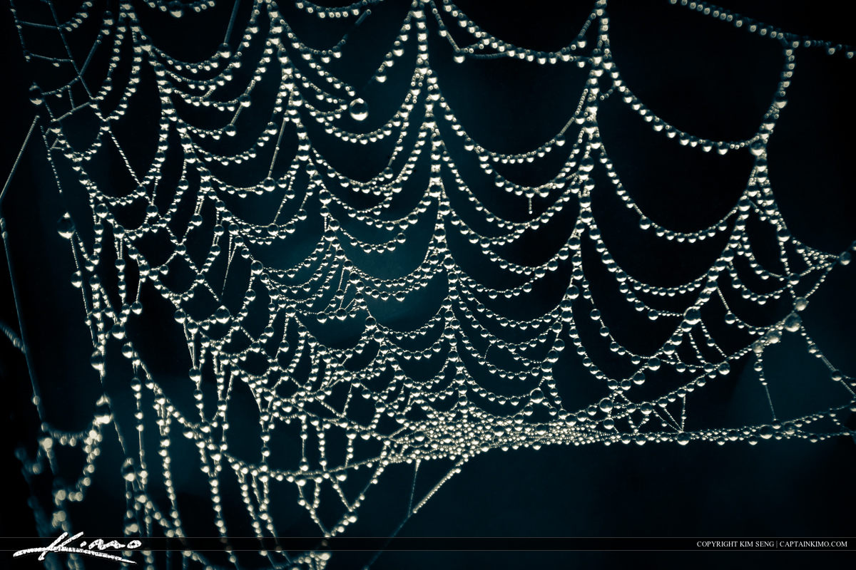 Spider Web with Morning Dew Water Droplets at Wetlands