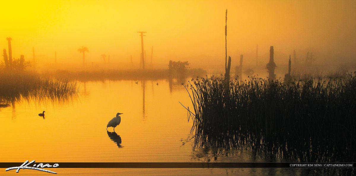 White Heron During Foggy Morning Sunrise at Viera Wetlands