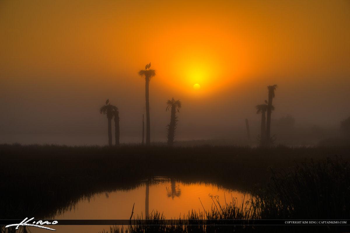 Foggy Morning Sunrise at Viera Wetlands Melbourne Florida