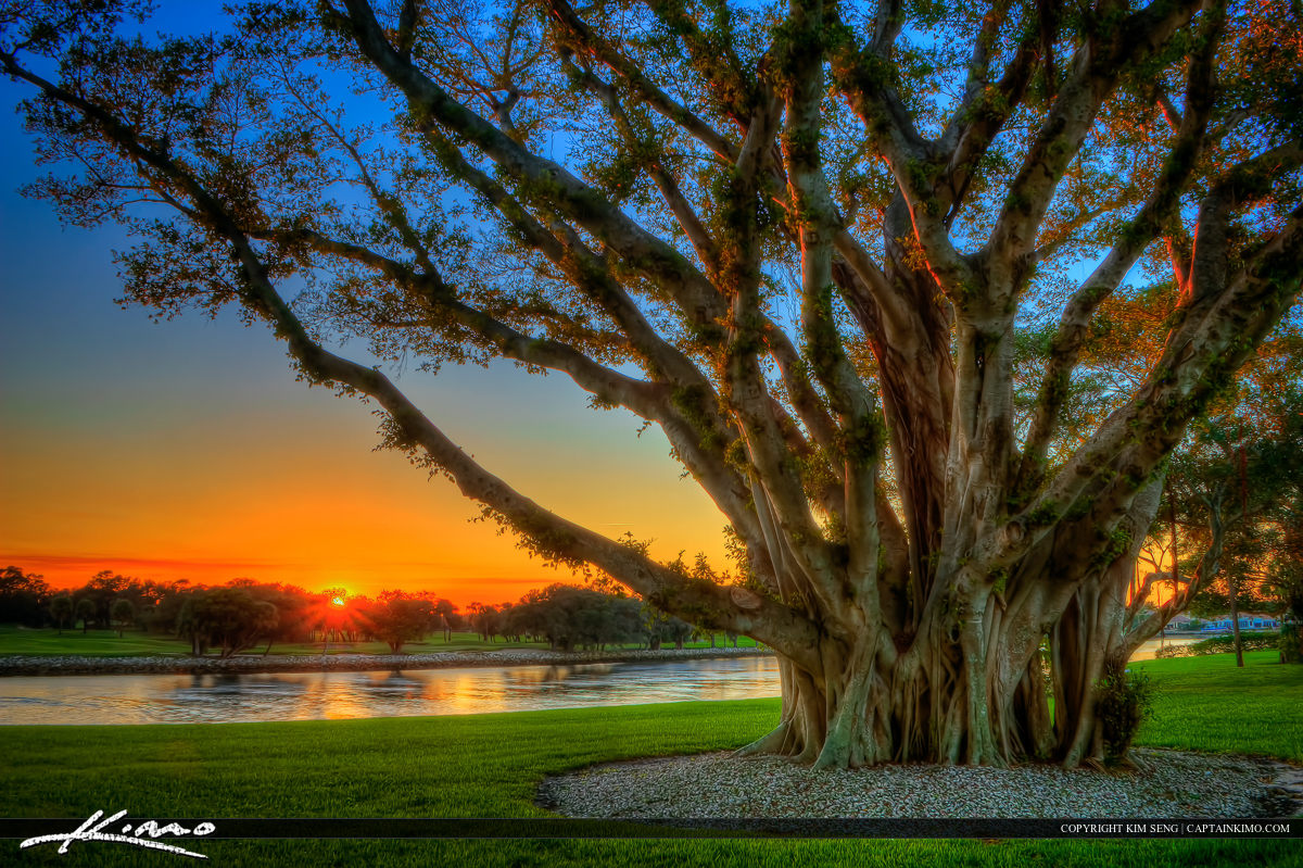 Sunset at North Palm Beach Next to Banyan Tree at Intracoastal