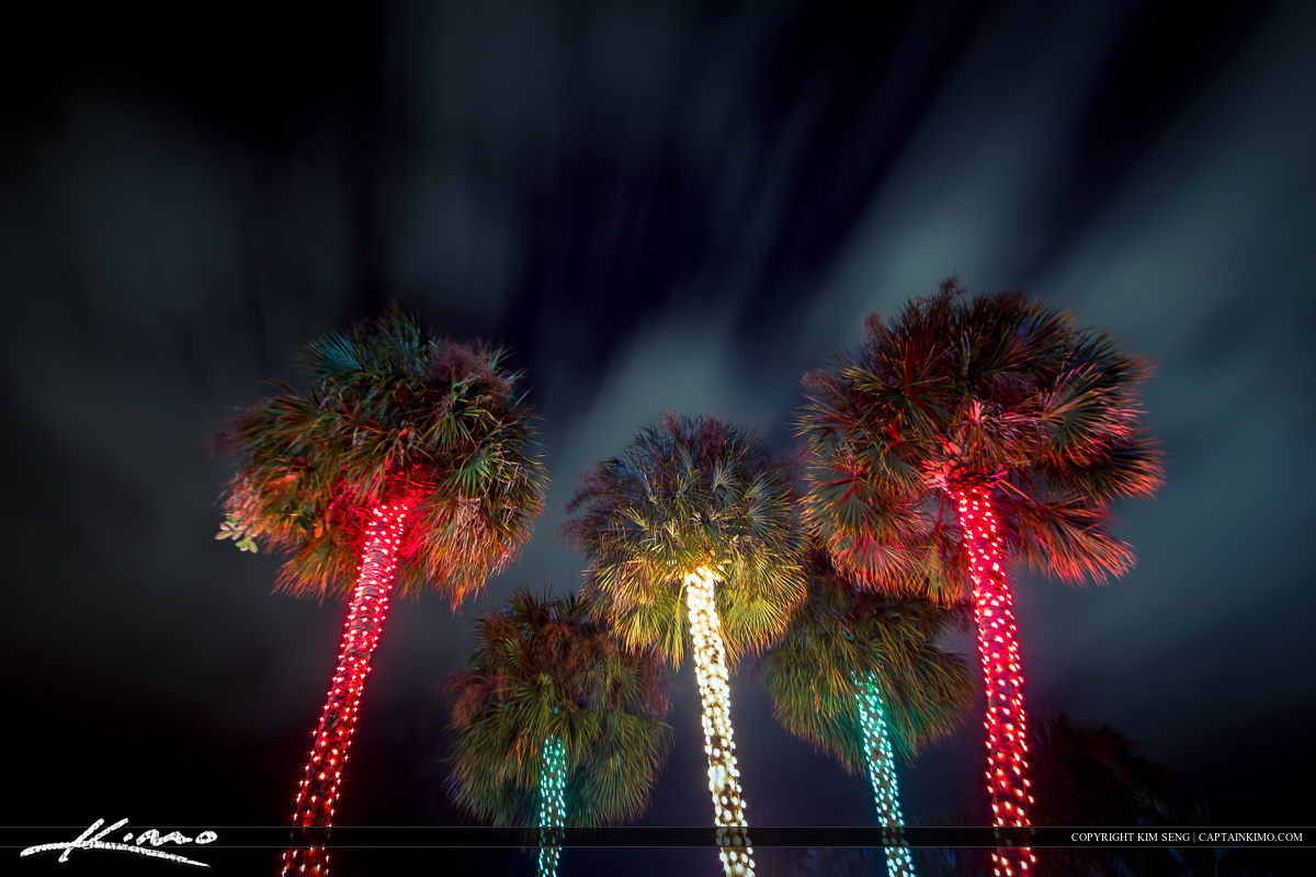Christmas Tree Lights South Florida Style