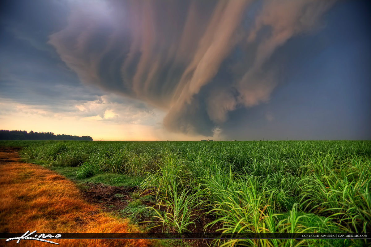 Storm Cell Cloud Forming OVer Sugarcane Fileds in Florida