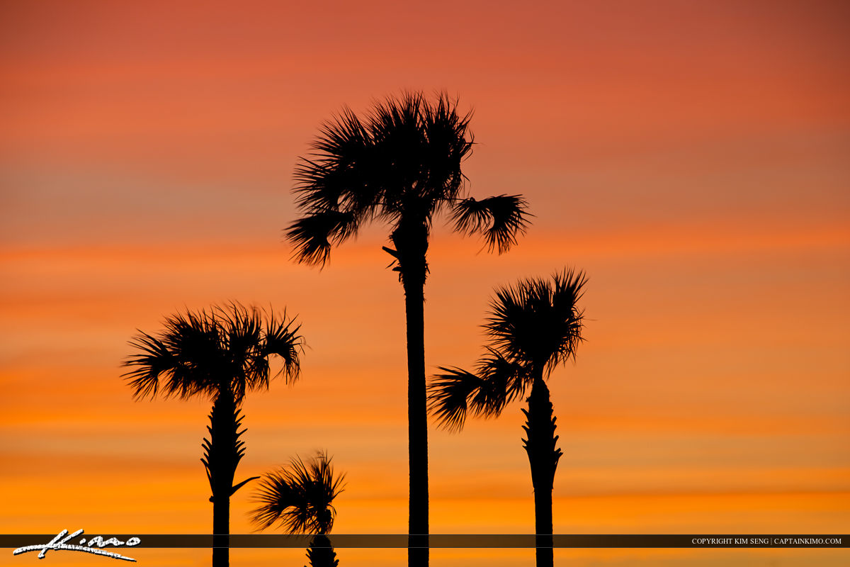 Family of Palm Trees During a Beautiful Florida Sunset