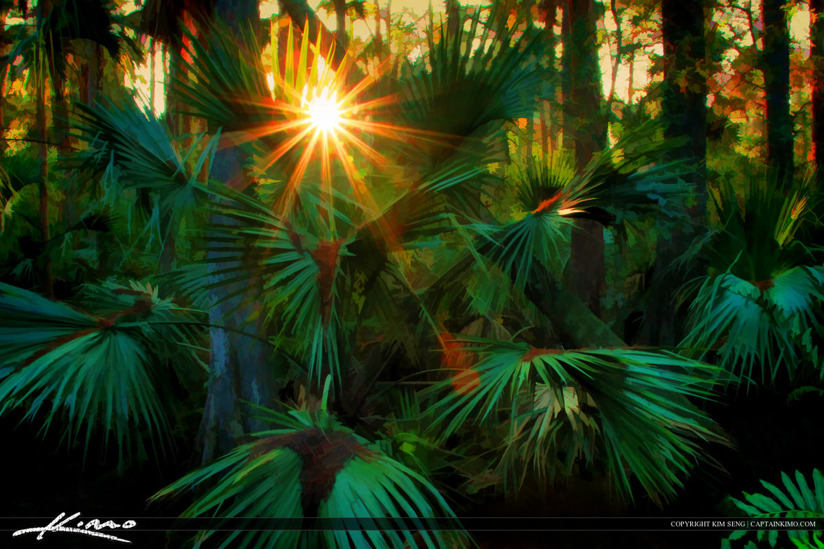 Sun Burst at Riverbend Park Wetlands Through Palm Frawns