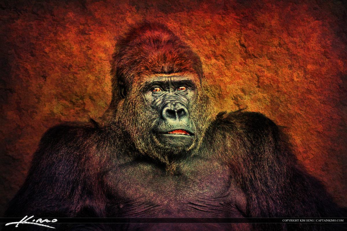 Silverback Gorilla from Miami Metro Zoo Florida