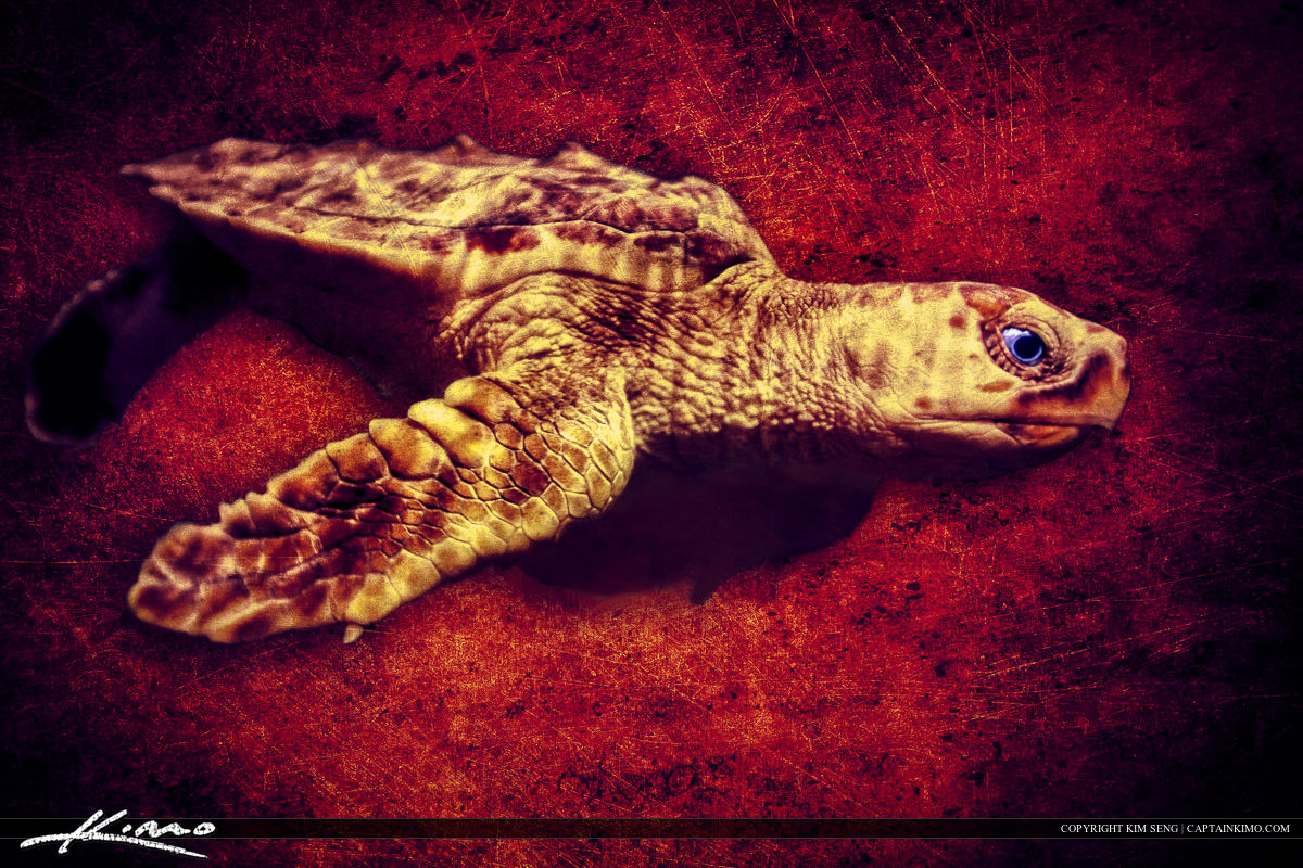 Sea Turtle Marine Animal Creature Auqatic
