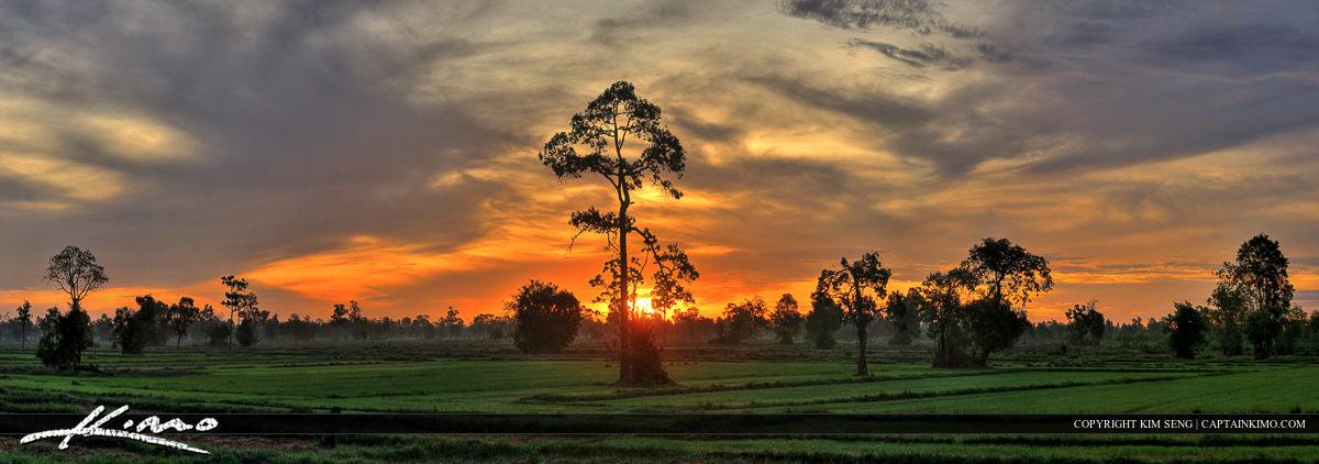 Panoramic Rice Field Sunrise Isan Buriram Thailand